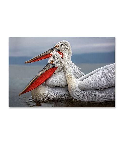 "Trademark Global Xavier Ortega 'Dalmatian Pelicans' Canvas Art - 32"" x 22"" x 2"""
