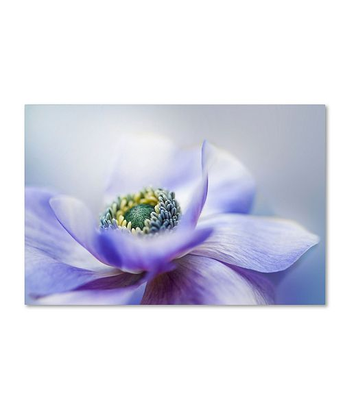 "Trademark Global Jacky Parker 'Anemone De Caen' Canvas Art - 19"" x 12"" x 2"""