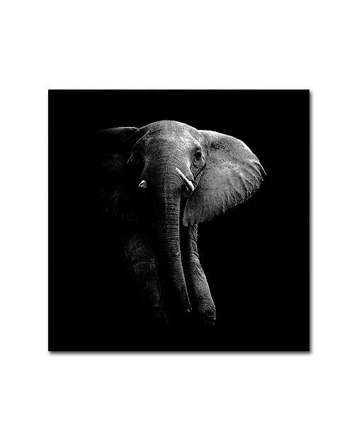 """Trademark Global WildPhotoArt 'Elephant' Canvas Art - 24"""" x 24"""" x 2"""""""