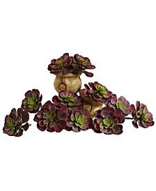 "6"" Echeveria Succulent, Set of 12"