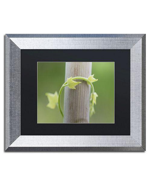 """Trademark Global Kurt Shaffer 'New Growth' Matted Framed Art - 11"""" x 14"""""""