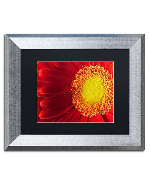 "Trademark Global PIPA Fine Art 'Nature's Beauty' Matted Framed Art - 11"" x 14"""