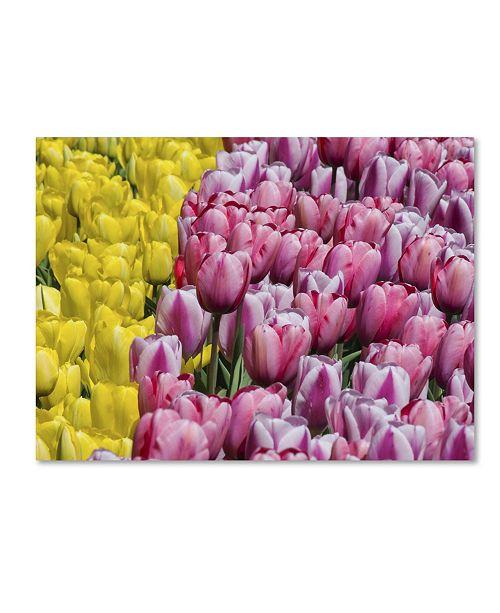 "Trademark Global Kurt Shaffer 'Tulip Heaven' Canvas Art - 18"" x 24"""