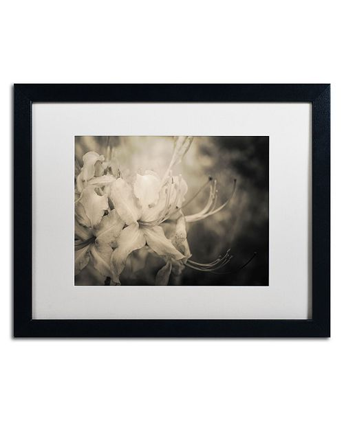 "Trademark Global PIPA Fine Art 'Sepia Aged Rhododendron Blooms' Matted Framed Art - 16"" x 20"""