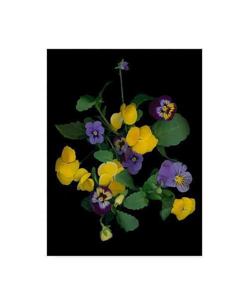 "Trademark Global Susan S. Barmon 'Pansies 1' Canvas Art - 18"" x 24"""