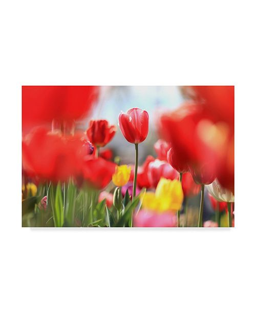 """Trademark Global Incredi 'Red Tulip Astraction' Canvas Art - 24"""" x 16"""""""