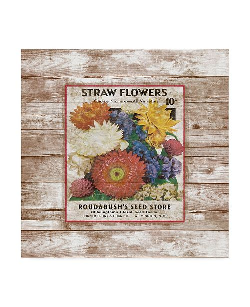 """Trademark Global Jean Plout 'Straw Flowers On Wood 1' Canvas Art - 18"""" x 18"""""""