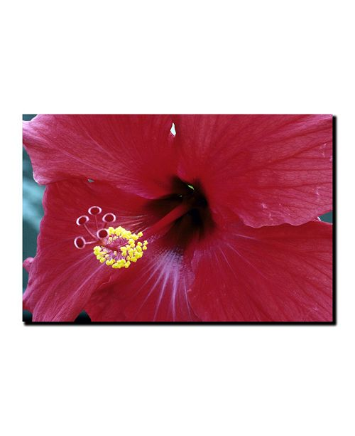 "Trademark Global Into The Hibiscus by Kurt Shaffer Canvas Art - 19"" x 14"""