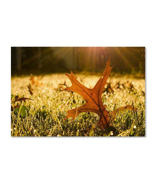 "Trademark Global PIPA Fine Art 'Fall Leaf in Morning Sun' Canvas Art - 22"" x 32"""