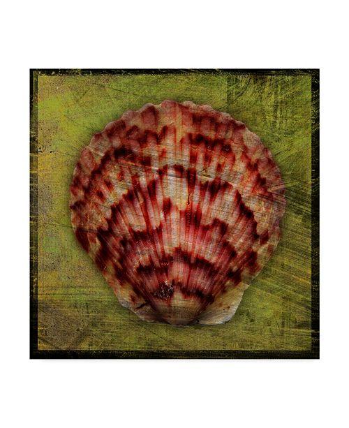 """Trademark Global John W. Golden 'Scallop' Canvas Art - 35"""" x 35"""""""