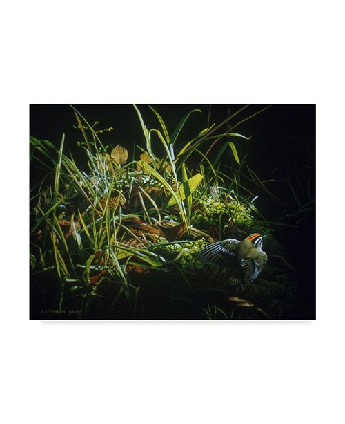 "Trademark Global Ron Parker 'Golden Crowned Kinglet' Canvas Art - 35"" x 47"""