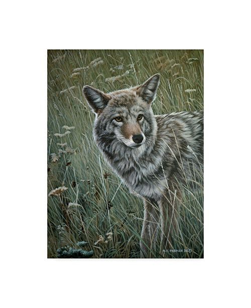 "Trademark Global Ron Parker 'Coyote In The Grass' Canvas Art - 35"" x 47"""