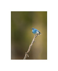 """Galloimages Online 'Mountain Blue Bird' Canvas Art - 35"""" x 47"""""""