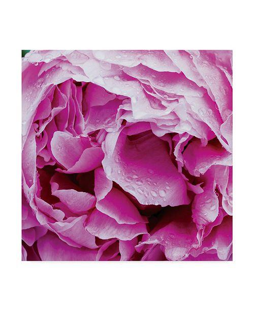 "Trademark Global Kurt Shaffer 'Spring Rain On A Peony 2' Canvas Art - 35"" x 35"""