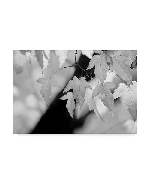 """Trademark Global Nicholas Bell Photography 'Leaves And Light' Canvas Art - 47"""" x 30"""""""