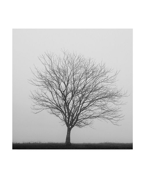 "Trademark Global Nicholas Bell Photography 'Winter Trio 2' Canvas Art - 35"" x 35"""