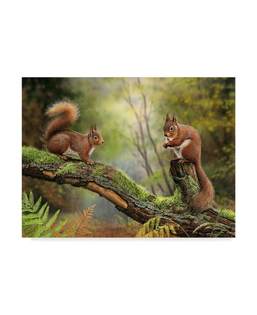 "Trademark Global Nigel Artingstall 'Red Squirrels' Canvas Art - 47"" x 35"""