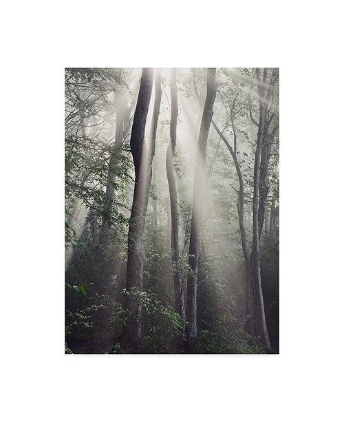 "Trademark Global Nicholas Bell Photography 'Woodland Sun' Canvas Art - 24"" x 32"""