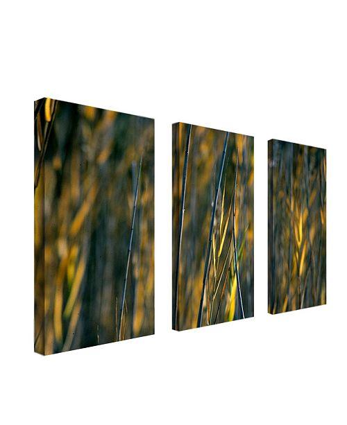 """Trademark Global Prairie Grass I by Kurt Shaffer Canvas Art - 24"""" x 8"""""""