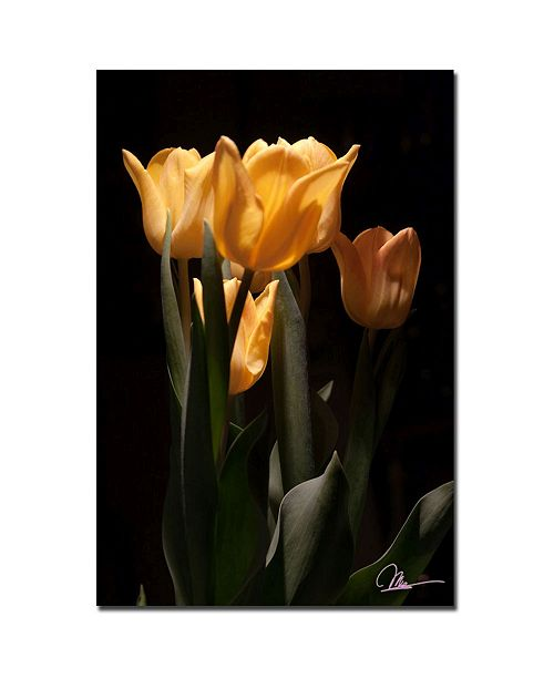 "Trademark Global Martha Guerra 'Tulips Blooms VI' Canvas Art - 24"" x 16"""