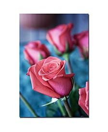 """Martha Guerra 'Pink Rose' Canvas Art - 24"""" x 16"""""""