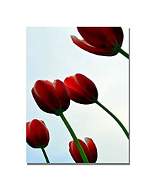 """Michelle Calkins 'Red Tulips from the Bottom Up' Canvas Art - 24"""" x 18"""""""