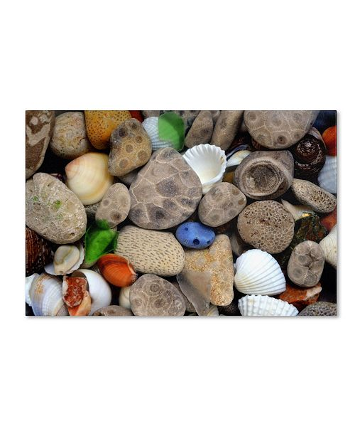 "Trademark Global Michelle Calkins 'PetoskeyStones lll' Canvas Art - 47"" x 30"""