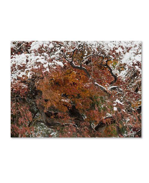 """Trademark Global Kurt Shaffer 'Early Snow Fall' Canvas Art - 35"""" x 47"""""""