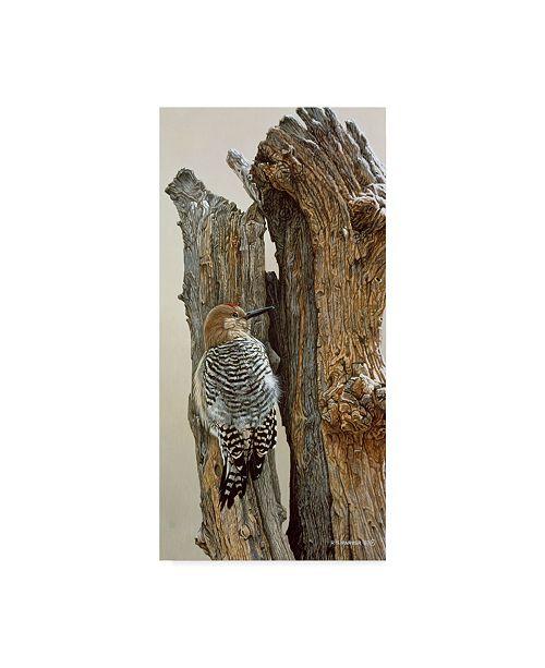 "Trademark Global Ron Parker 'Gila Woodpecker' Canvas Art - 10"" x 19"""