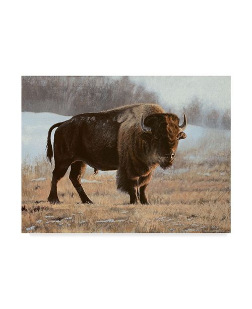 "Trademark Global Rusty Frentner 'Bison' Canvas Art - 14"" x 19"""