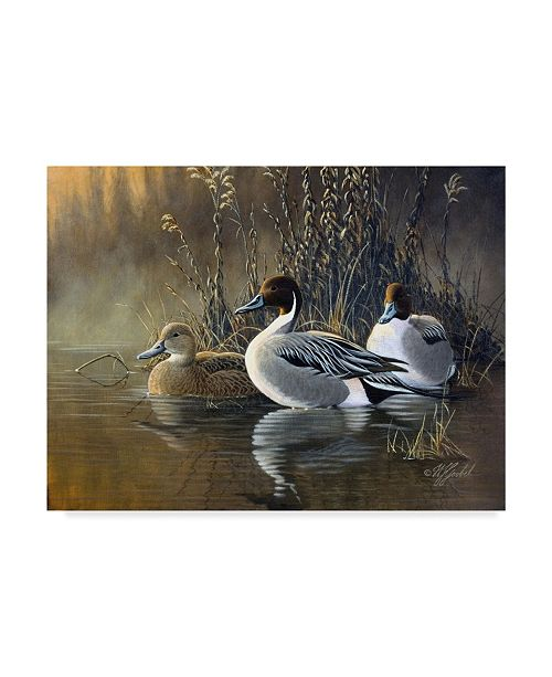 "Trademark Global Wilhelm Goebel 'Pintail Trios' Canvas Art - 14"" x 19"""