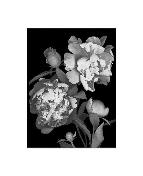"Trademark Global Susan S. Barmon 'Peony Black And White' Canvas Art - 14"" x 19"""