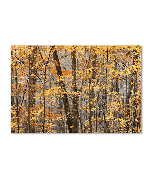 "Trademark Global Jason Shaffer 'Autumn Tree line' Canvas Art - 32"" x 22"""