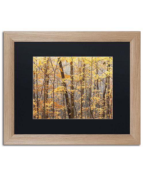 """Trademark Global Jason Shaffer 'Autumn Tree line' Matted Framed Art - 20"""" x 16"""""""