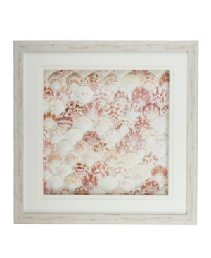 Natural Fan Shell Wall Art in White Distressed Shadowbox Frame - Fan Shell/Ps/Glass/Cardboard
