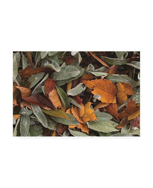 """Trademark Global Kurt Shaffer Photographs Autumn Leaf Abstract Canvas Art - 19.5"""" x 26"""""""