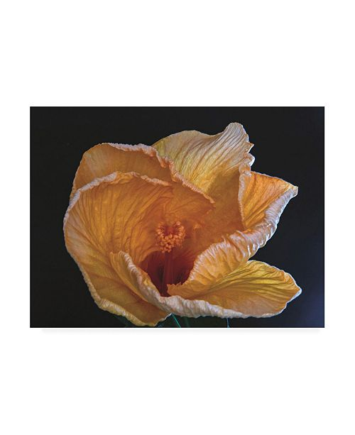 "Trademark Global Kurt Shaffer Photographs Heavenly Hibiscus Canvas Art - 15.5"" x 21"""