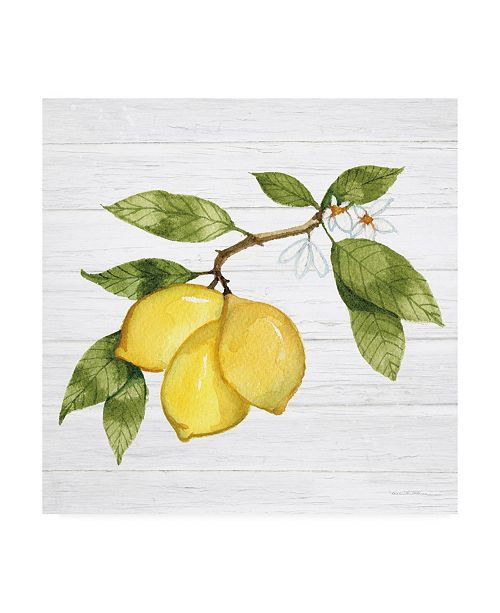 "Trademark Global Kathleen Parr McKenna Citrus Garden I Shiplap Canvas Art - 15.5"" x 21"""
