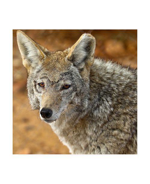 "Trademark Global Mitch Catanzaro Coyote in the Desert Canvas Art - 15.5"" x 21"""
