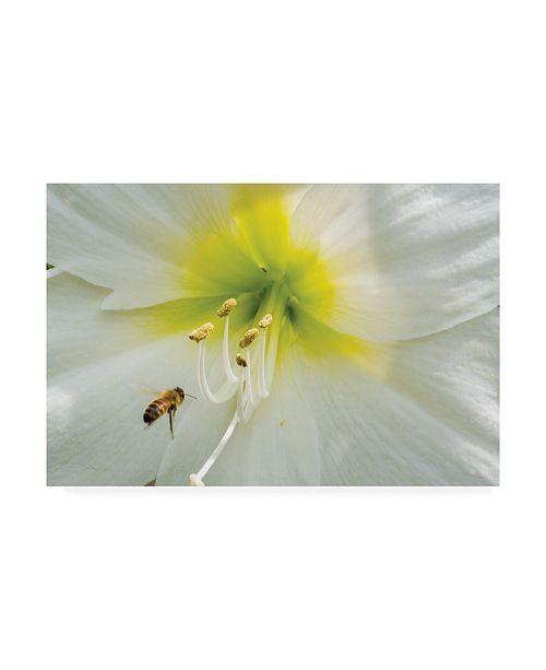 "Trademark Global Kurt Shaffer The Bee and The Amaryllis Canvas Art - 15"" x 20"""