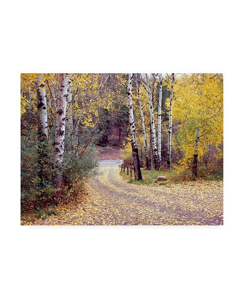 """Trademark Global Monte Nagler Birch Tree Drive Fence and Road Santa Fe New Mexico Canvas Art - 37"""" x 49"""""""