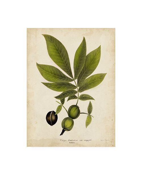 "Trademark Global John Torrey Hickory Tree Foliage Canvas Art - 20"" x 25"""