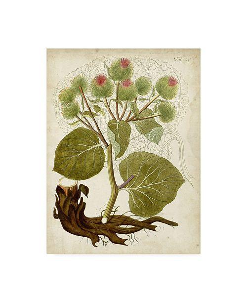 "Trademark Global Unknown Horticultural Specimen V Canvas Art - 15.5"" x 21"""