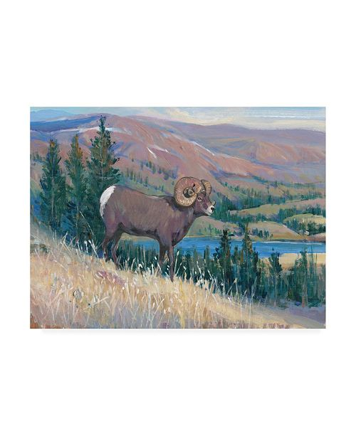 "Trademark Global Tim O'Toole Animals of the West III Canvas Art - 27"" x 33.5"""