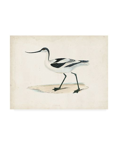 "Trademark Global Morris Morris Sandpiper IV Canvas Art - 15.5"" x 21"""