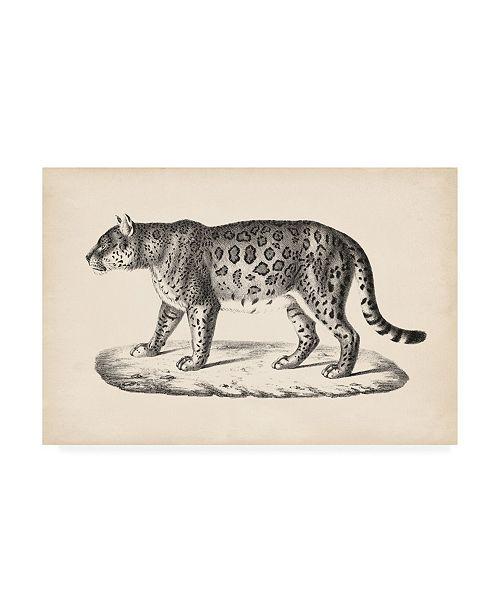 "Trademark Global Brodtmann Brodtmann Female Leopard Canvas Art - 15.5"" x 21"""