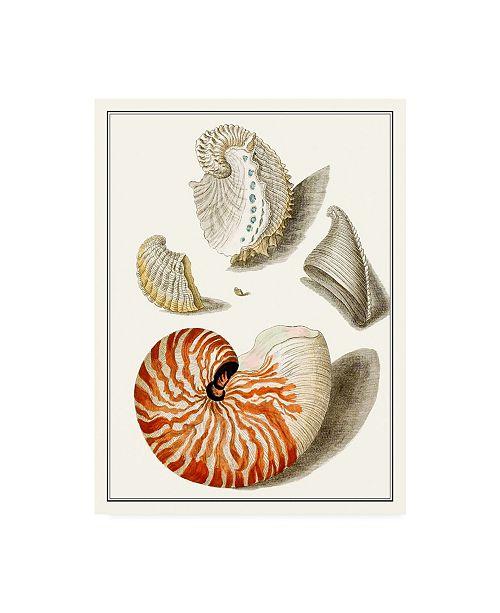 "Trademark Global Vision Studio Collected Shells I Canvas Art - 27"" x 33.5"""