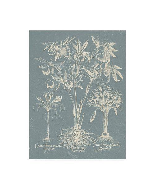 "Trademark Global Vision Studio Delicate Besler Botanical II Canvas Art - 27"" x 33.5"""