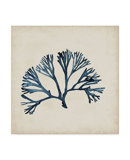 "Trademark Global Naomi Mccavitt Seaweed Specimens XI Canvas Art - 15"" x 20"""