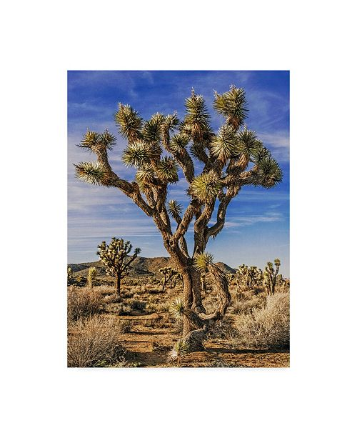 "Trademark Global Rachel Perry Views of Joshua Tree III Canvas Art - 20"" x 25"""